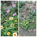 散歩道で見かけた花達!