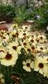 ( ・∇・)🌱🌱今年の花🌱🌱