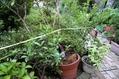今朝の庭(台風直撃)