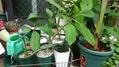 多肉植物実生苗