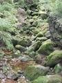 白駒池と苔の森🌱🌱🌱①