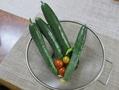 我家で🍅実となる野菜(その14)