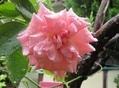 🌻今日の花たち🌻その97