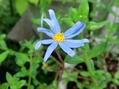 ブル-のお花たち