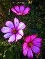 朝陽を浴びる花たち🌺
