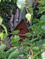 我が家の白樺の木の巣箱から四十雀が(3)