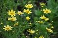 梅雨明けを待つ夏の花たち