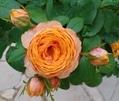 先週の研修で、花遊庭へ行ってきました!