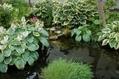 庭のギボウシ