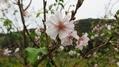 田圃道歩きでみつけた秋-十月桜