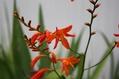 雑草化しそうな花たち