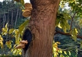 モミジの木にキノコ