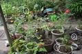 夏の鉢植え