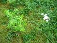 はびこる植物たち