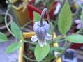 若紫さん[i:237]