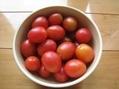 野菜の時間⑦ 収穫、収穫(^.^)
