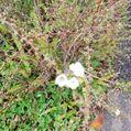 22日雨後晴れ。桜🌸の蕾膨らむ。春よ来い!