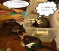 クワガタさんと猫