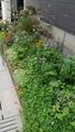 我が家の花壇、今現在の様子