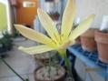 やっと花一輪…咲きました。