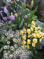 咲き始めました🎵&🌷新しい蕾