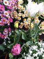我が家の花🌼芽&蕾編⑪