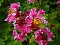 夏の花秋の花も咲いてます。