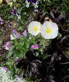 いろいろ花盛り~♪
