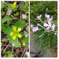 散歩道で見かけた花