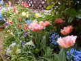 今日の庭4/19-PM(晴)