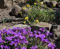 春花壇の定番
