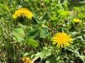 春の野の花