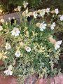庭に咲いているお花さん達😊🎶
