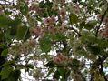 桜の季節も
