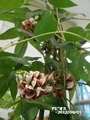 ブルームーン(月)と野菜の花