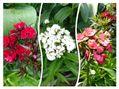 お洒落な花✨