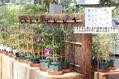 「変化朝顔展」新潟県立植物園
