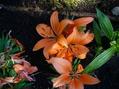 今咲いている花たち