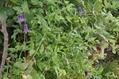 ロウグチ3番花咲いたよ