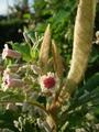 今朝の庭メモ2