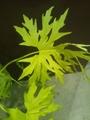 珍しい?観葉植物
