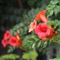 番外の赤いお花たち