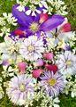 クレマチスの花殻で花遊び🌸