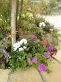 秋の園芸♪