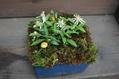 苔と野菊と大文字草