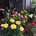 今日の花🎀庭の風景