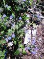 庭のハーブ達🌿6月3日