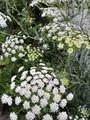 6月の庭〜実と花と葉と