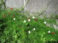 境界線に咲く花