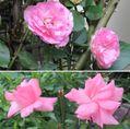 🌻今日の花たち🌻その111